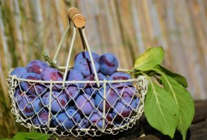 plums-1649602_1920